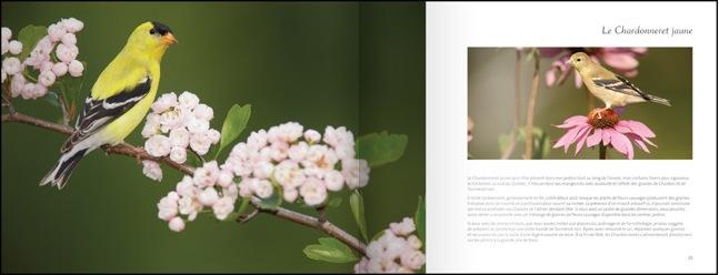 livre-les-oiseaux-du-jardin-02