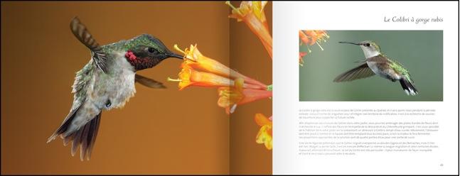 livre-les-oiseaux-du-jardin-04