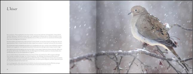 livre-les-oiseaux-du-jardin-05