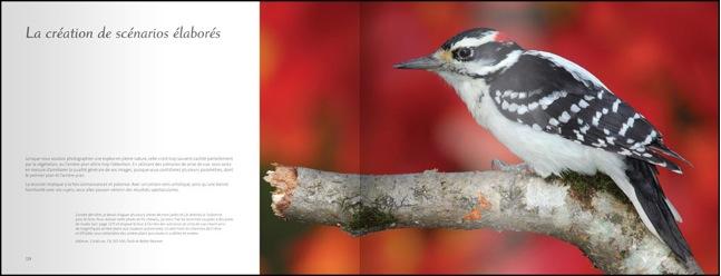 livre-les-oiseaux-du-jardin-06