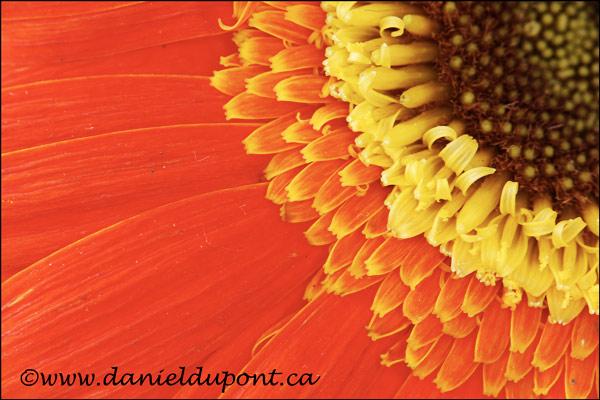 Fleur_Flash-3-4X6--13-3773