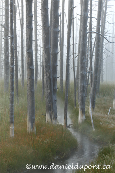 Yellowstone_brume-13-9763