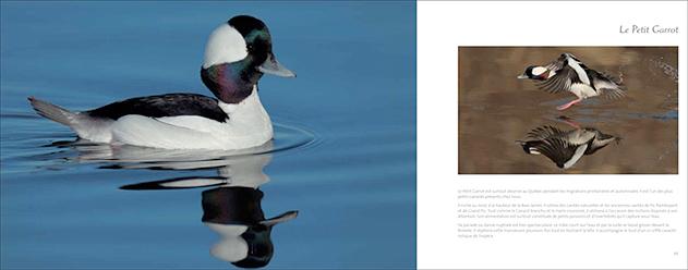 livre-les-oiseaux-du-marais-03