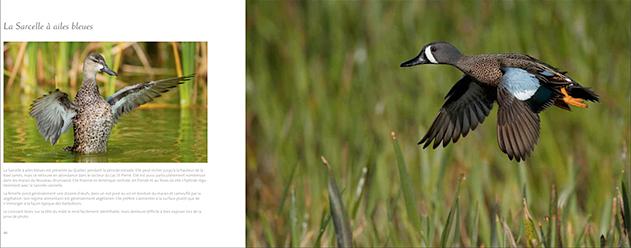 livre-les-oiseaux-du-marais-04