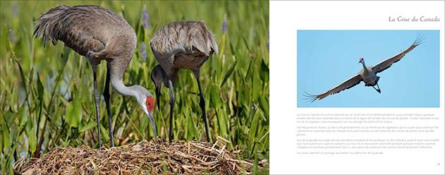 livre-les-oiseaux-du-marais-05