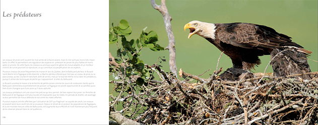 livre-les-oiseaux-du-marais-06