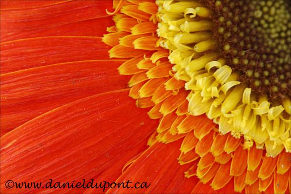 Fleur_Flash-3-13-3773