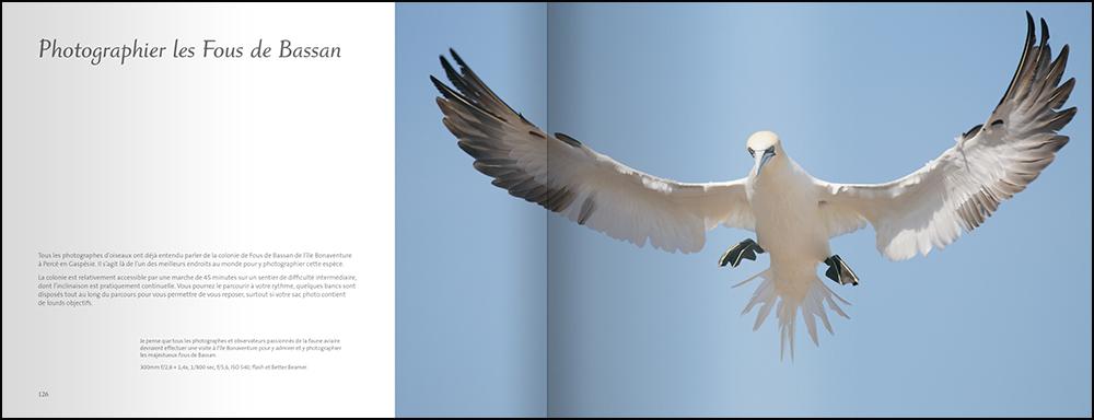 OiseauxJardin_PagesInt_F.indd