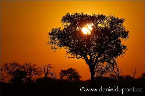 Coucher_soleil_Afrique-8-15-9694