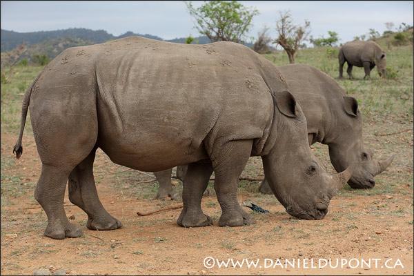 Nouvelle date pour Safari photo en Afrique du Sud