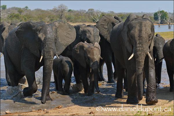 Éléphants-15-4819