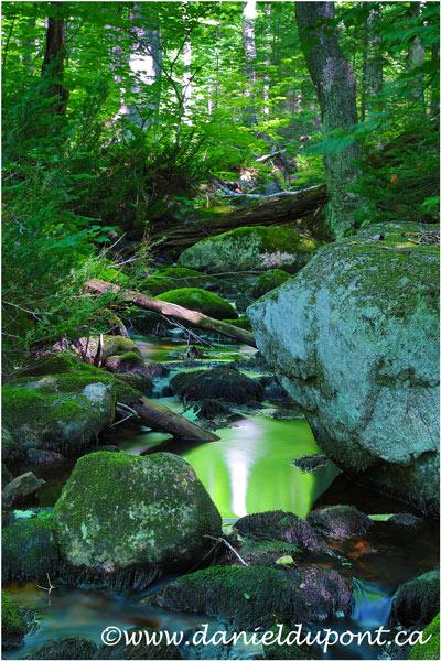 Ruisseau_Portneuf-16-4328