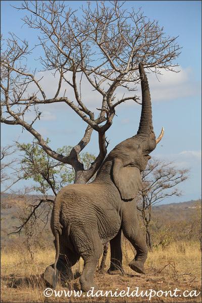 elephant-4-16-7074