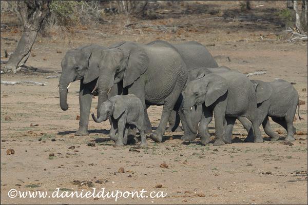 elephants-16-1545