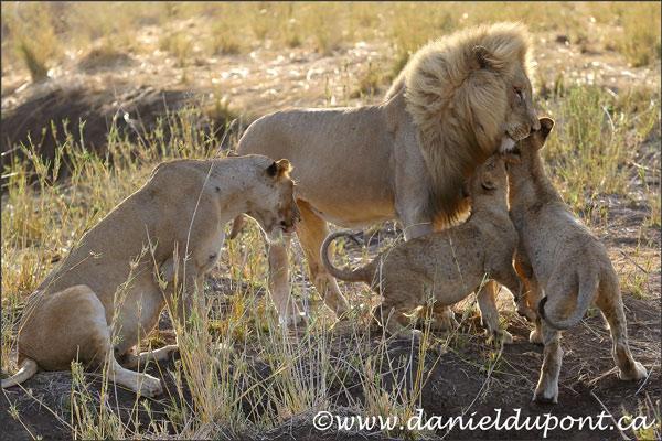 lions-16-7840
