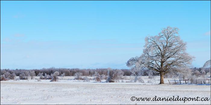 pan_arbre_glace_hiver-40x20-16-6403