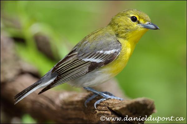 Rapport d'atelier : Les oiseaux de Pointe Pelée et du sud de l'Ontario