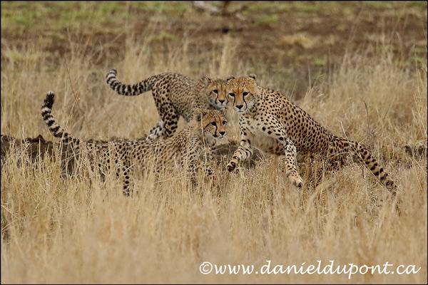 Rapport du safari photo d'octobre 2018 en Afrique du Sud