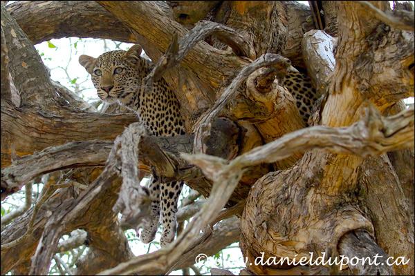 Rapport du safari photo en Afrique du Sud de septembre 2018
