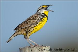 Améliorer vos photos d'oiseaux