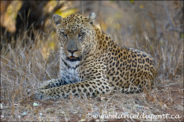 Rapport du safari photo en Afrique du Sud en septembre 2019