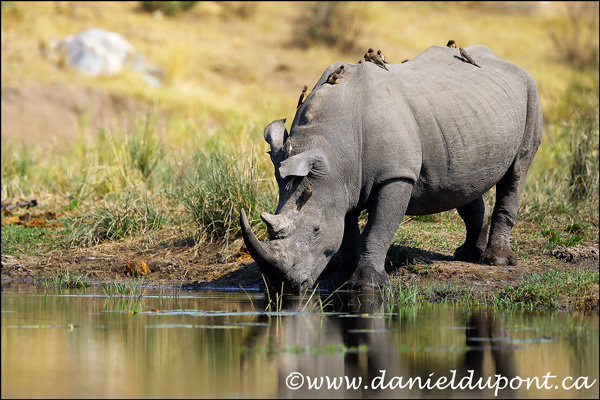 Conférence au Salon de la photo de Québec : Vivre un safari photo en Afrique