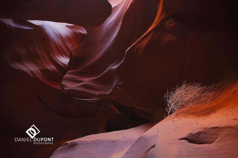Antelope Canyon ©