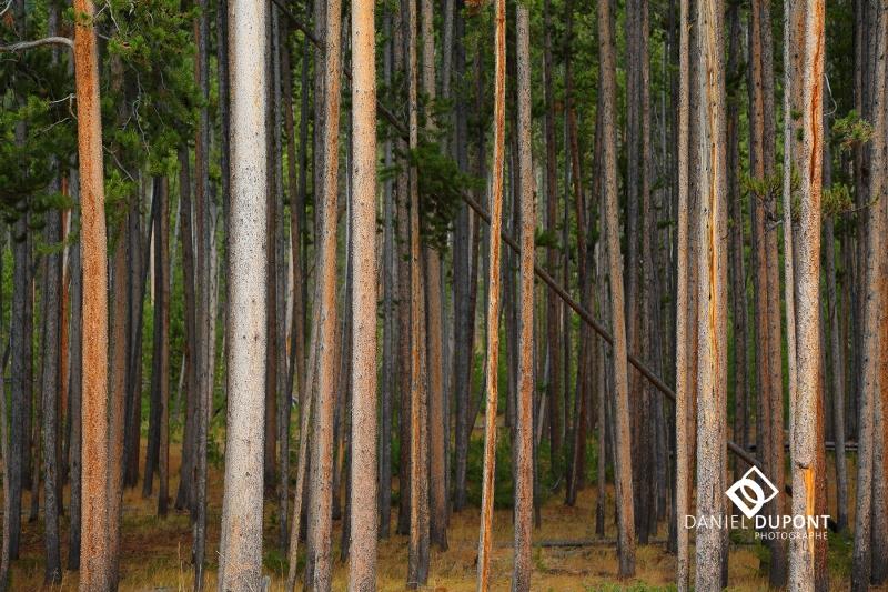 Parc national de Yellowstone ©